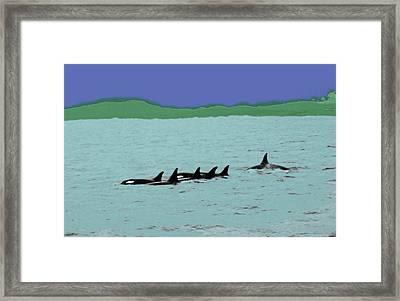 Orca Pod Framed Print by Al Bourassa