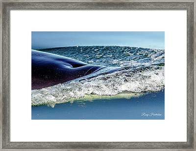 Orca To The Surface Framed Print