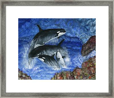 Orcas Family Frolicks Framed Print by Tanna Lee M Wells