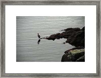 Orcas Island Bird  Framed Print