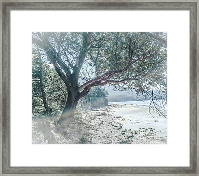Orcas Medrona Framed Print by William Wyckoff