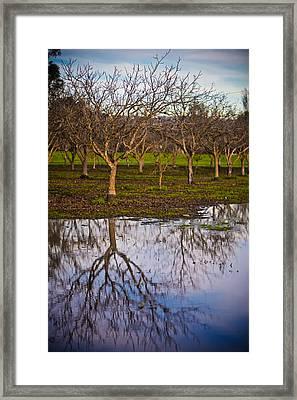 Orchard IIi Framed Print by Derek Selander