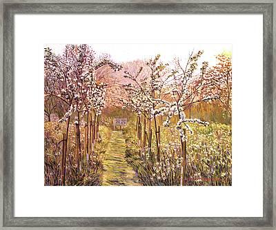 Orchard Morning Framed Print by David Lloyd Glover