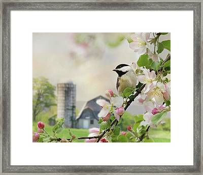 Orchard Visitor Framed Print by Lori Deiter
