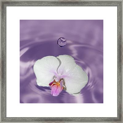 White Orchid Water Drop Framed Print