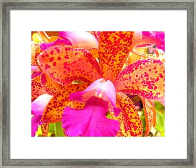 Orchid 1 Framed Print by Evguenia Men