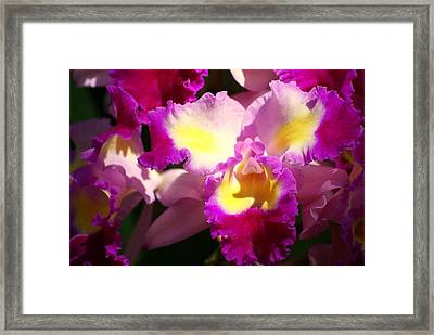 Orchid 1 Framed Print by Marty Koch