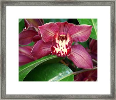 Orchid 10 Framed Print by Marty Koch