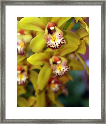 Orchid 11 Framed Print by Marty Koch
