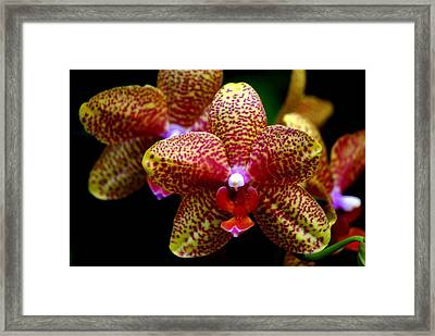 Orchid 15 Framed Print by Marty Koch