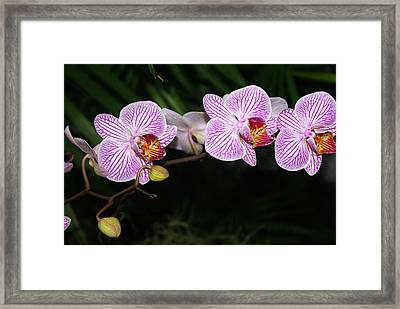 Orchid 2 Framed Print by Marty Koch