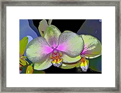 Orchid 2 Framed Print