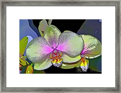 Orchid 2 Framed Print by Pamela Cooper