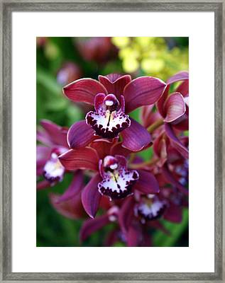 Orchid 20 Framed Print by Marty Koch