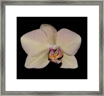 Orchid 2016 2 Framed Print by Robert Morin