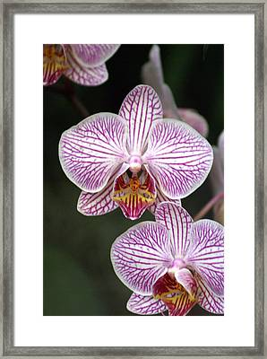 Orchid 22 Framed Print by Marty Koch