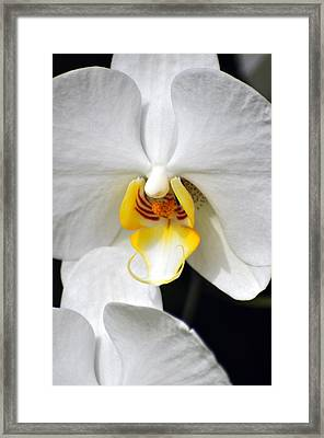 Orchid 23 Framed Print by Marty Koch