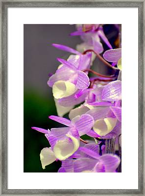 Orchid 25 Framed Print by Marty Koch