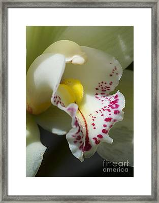 Orchid 257 Framed Print
