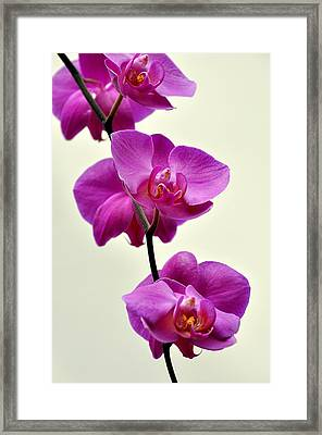 Orchid 26 Framed Print by Marty Koch
