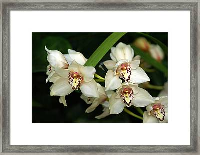 Orchid 3 Framed Print by Marty Koch