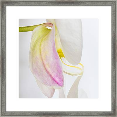 Orchid 3 Framed Print