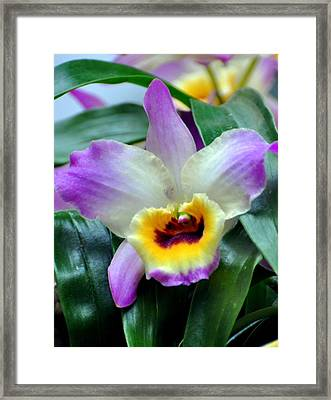 Orchid 34 Framed Print by Marty Koch