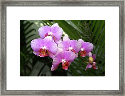 Orchid 4 Framed Print by Marty Koch