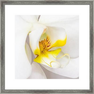 Orchid 4 Framed Print