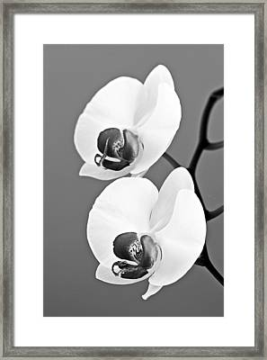 orchid-4- St Lucia Framed Print by Chester Williams