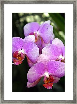 Orchid 5 Framed Print by Marty Koch