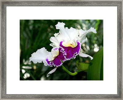 Orchid 6 Framed Print by Marty Koch