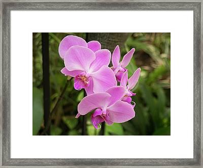 Orchid #6 Framed Print
