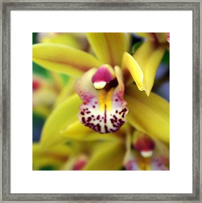 Orchid 9 Framed Print by Marty Koch