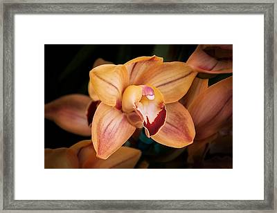 Orchid - A Quiet Elegance Framed Print by Tom Mc Nemar