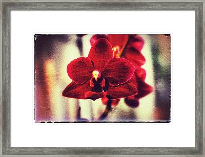 Framed Print featuring the photograph Orchid Alone by Isabella F Abbie Shores FRSA