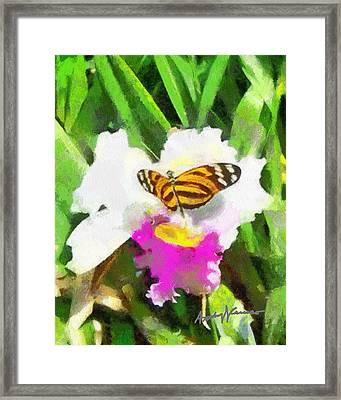 Orchid And Butterfly Framed Print by Anthony Caruso