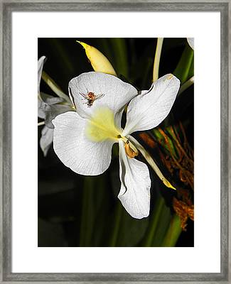 Orchid And Friend Framed Print