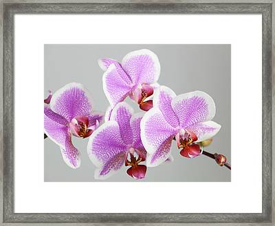 Orchid Array Framed Print