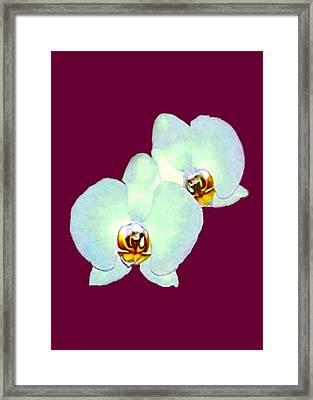 Orchid Art 5 Purple Zurich 2000 Jgibney The Museum Zazzle Gifts Framed Print by jGibney