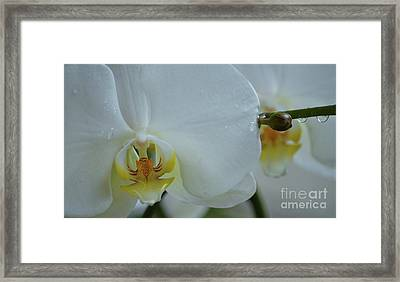 Pure Orchid Art Framed Print