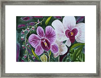Framed Print featuring the painting Orchid At Aos 2010 by Donna Walsh
