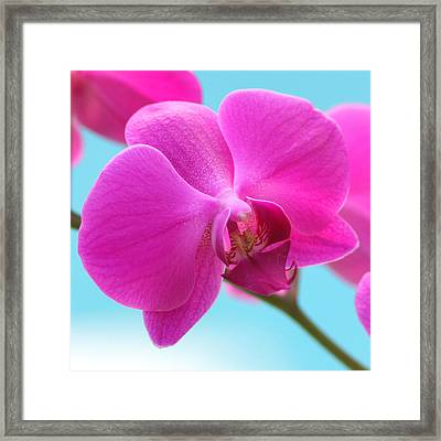 Orchid At The Ocean Closeup Framed Print by Michi Sherwood