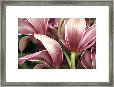 Orchid Ballet Framed Print by Diana Angstadt