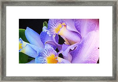 Orchid Bouquet Framed Print by Cindy Manero