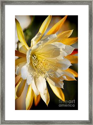 Orchid Cacti Beauty Framed Print by Mariola Bitner