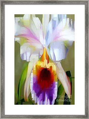 Orchid Cattleya Framed Print by Rafael Salazar