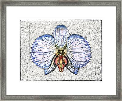 Orchid Framed Print by Charles Harden