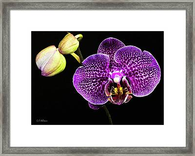 Orchid Framed Print by Christopher Holmes