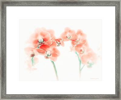 Orchid Collection 'soft Red' Framed Print